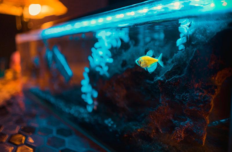 Pesca com Luzes, Vale a Pena Experimentar a Pesca Noturna